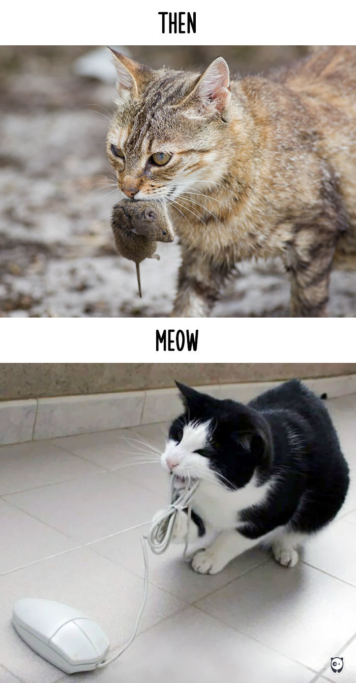 AD-Then-Now-How-Technology-Has-Changed-Cats-Lives-04