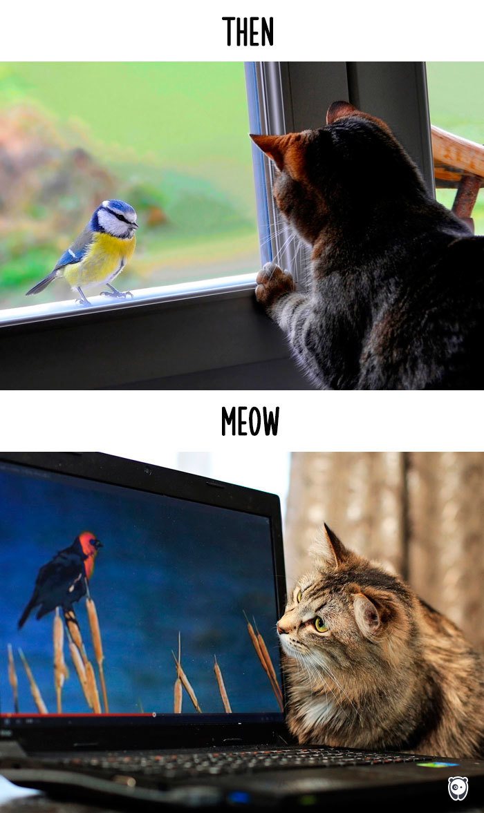 AD-Then-Now-How-Technology-Has-Changed-Cats-Lives-06