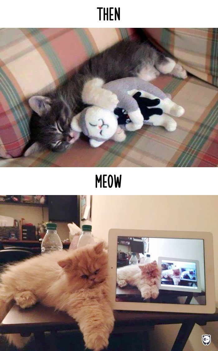 AD-Then-Now-How-Technology-Has-Changed-Cats-Lives-08