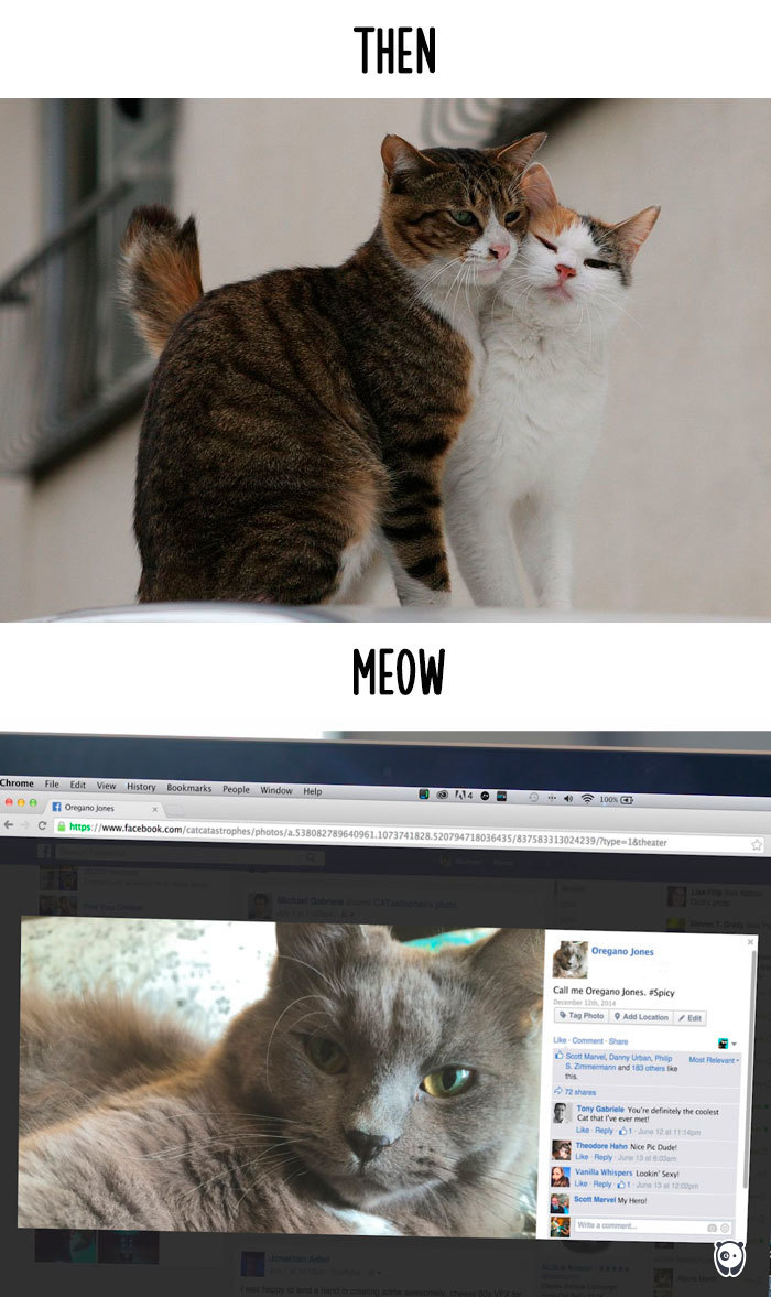 AD-Then-Now-How-Technology-Has-Changed-Cats-Lives-09