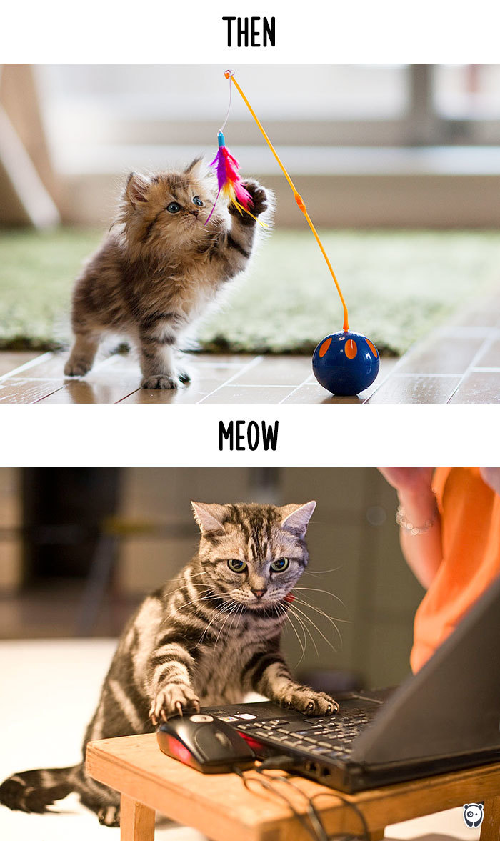 AD-Then-Now-How-Technology-Has-Changed-Cats-Lives-14