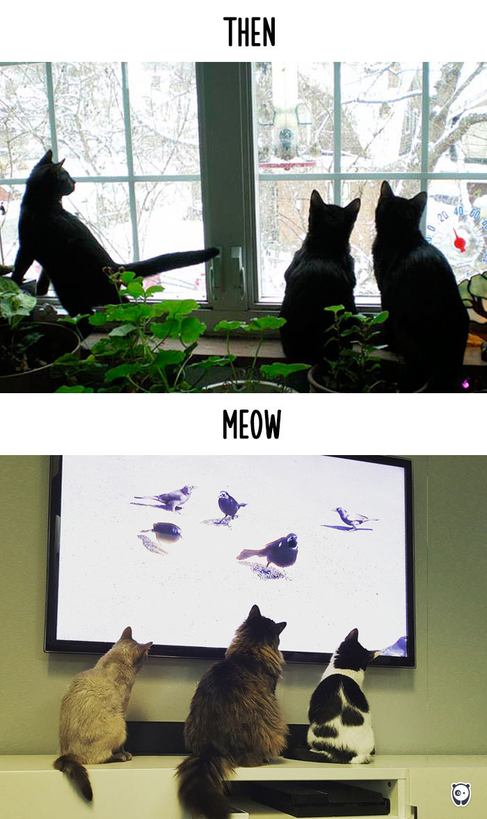 AD-Then-Now-How-Technology-Has-Changed-Cats-Lives-15