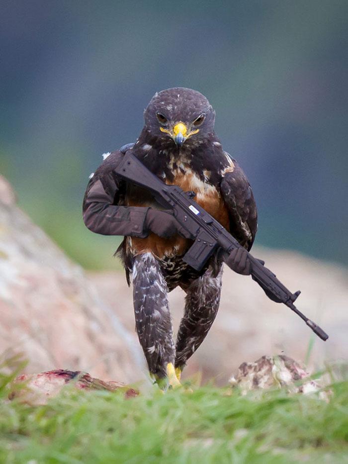 AD-Funny-Hawk-Photoshop-Battle-01