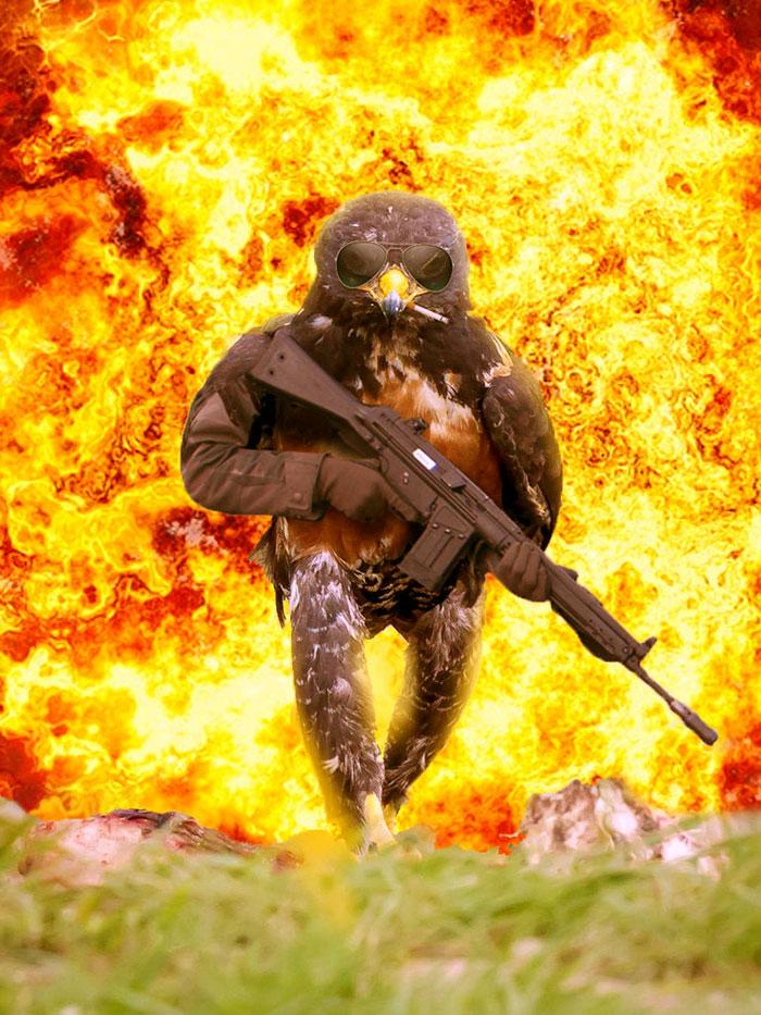 AD-Funny-Hawk-Photoshop-Battle-03