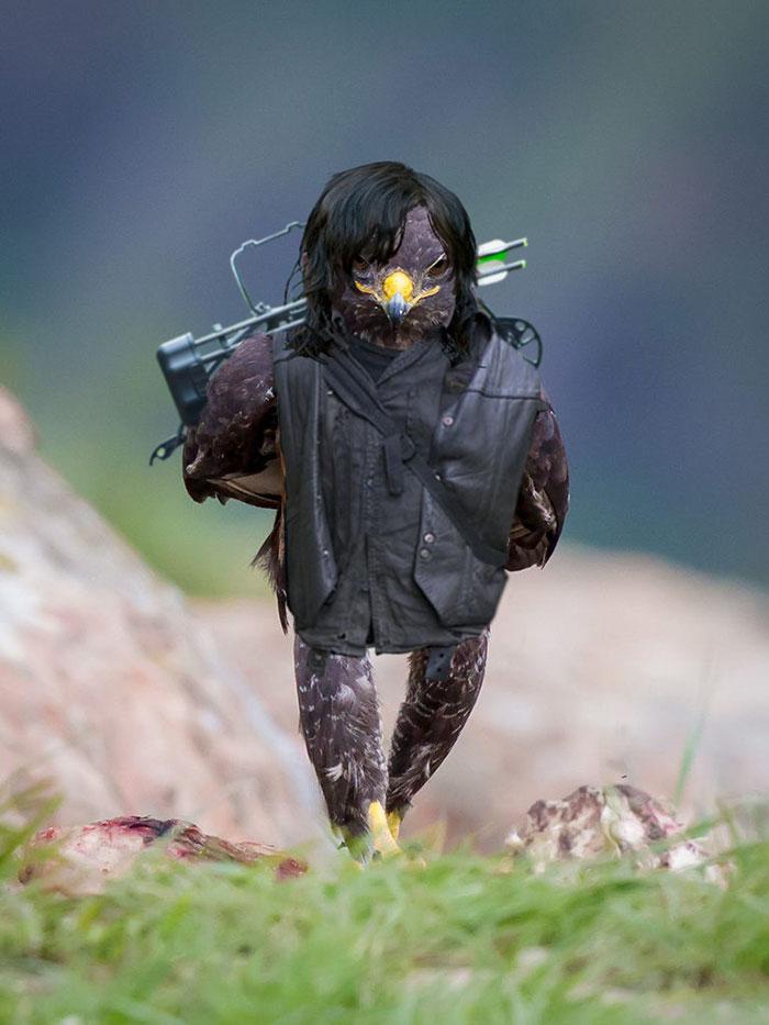 AD-Funny-Hawk-Photoshop-Battle-06