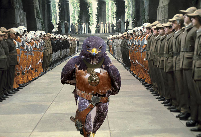 AD-Funny-Hawk-Photoshop-Battle-08