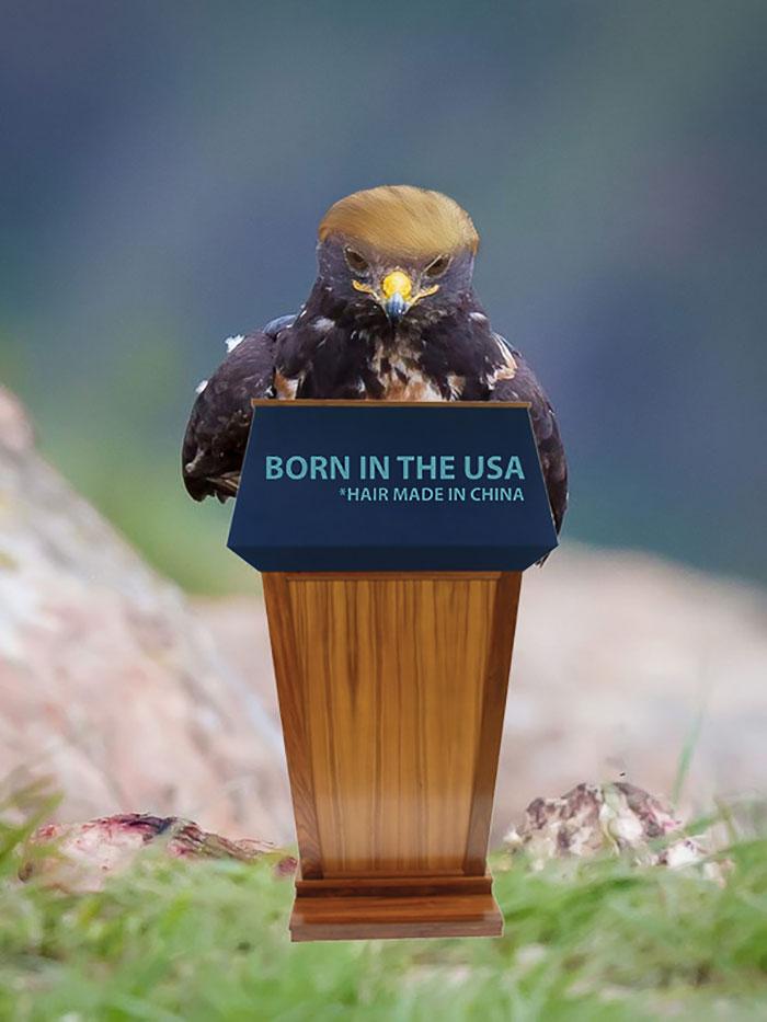 AD-Funny-Hawk-Photoshop-Battle-09