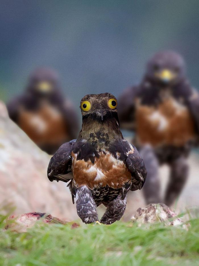 AD-Funny-Hawk-Photoshop-Battle-10