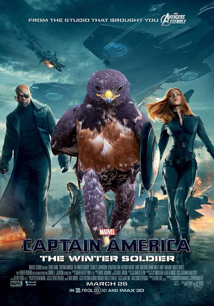AD-Funny-Hawk-Photoshop-Battle-11