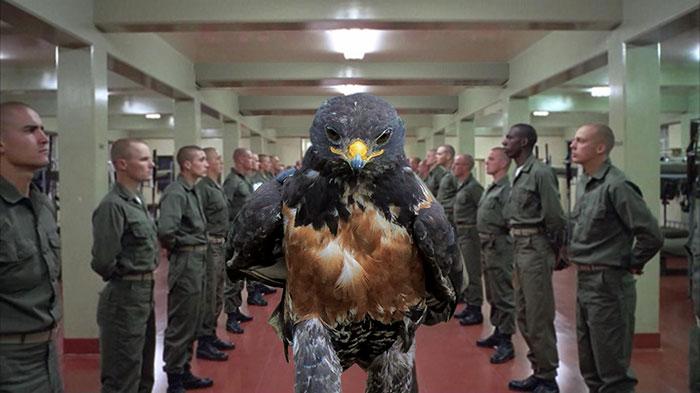 AD-Funny-Hawk-Photoshop-Battle-12