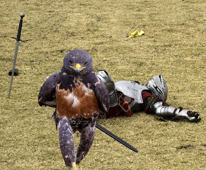 AD-Funny-Hawk-Photoshop-Battle-14