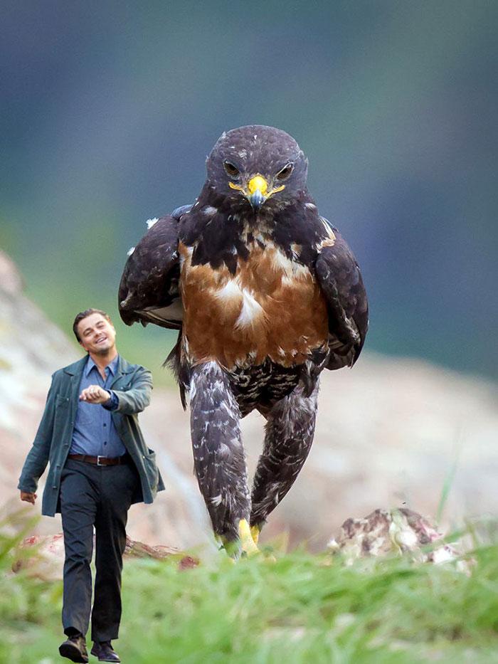 AD-Funny-Hawk-Photoshop-Battle-15