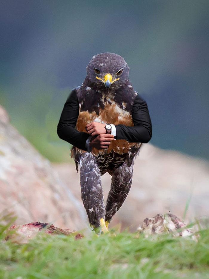 AD-Funny-Hawk-Photoshop-Battle-18