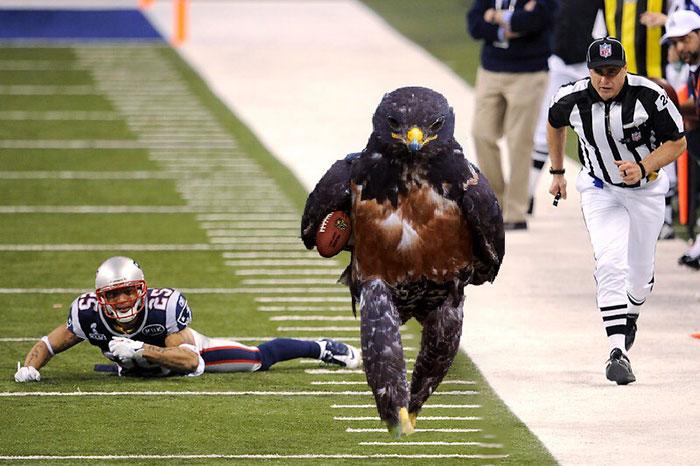 AD-Funny-Hawk-Photoshop-Battle-19