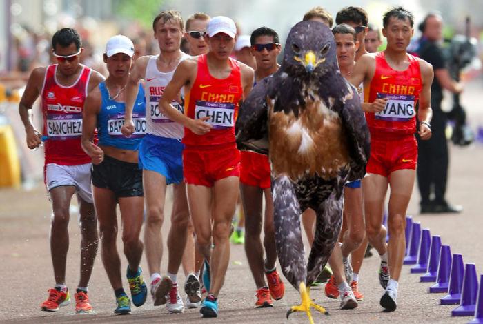 AD-Funny-Hawk-Photoshop-Battle-30