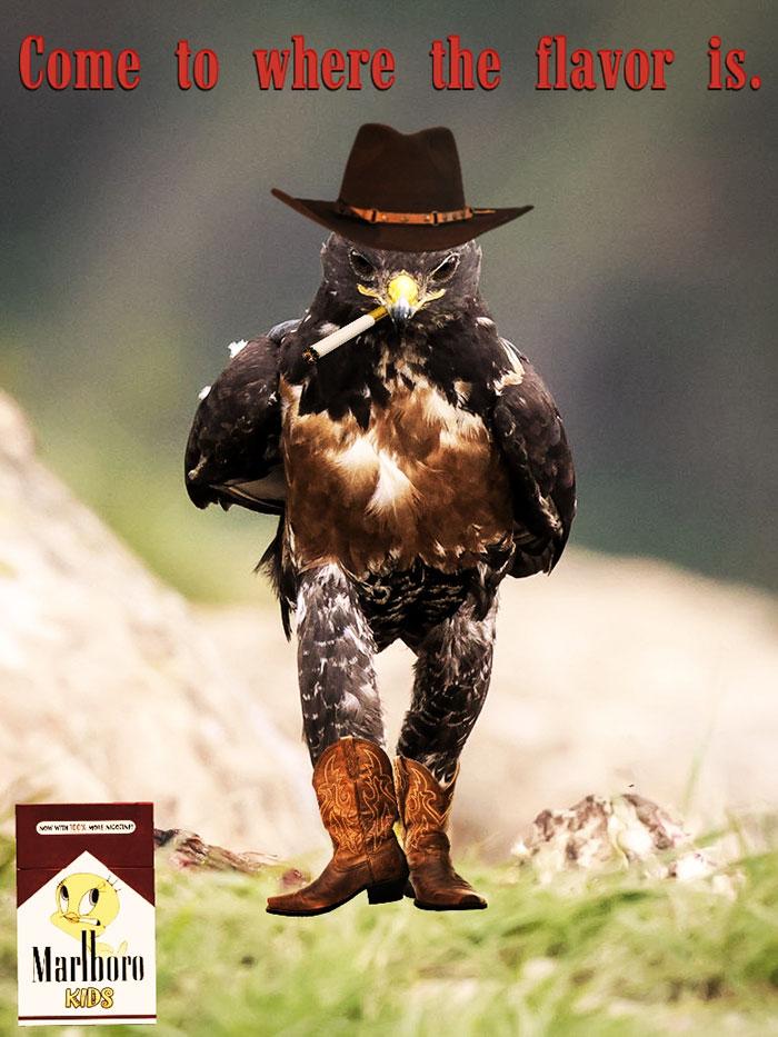 AD-Funny-Hawk-Photoshop-Battle-33