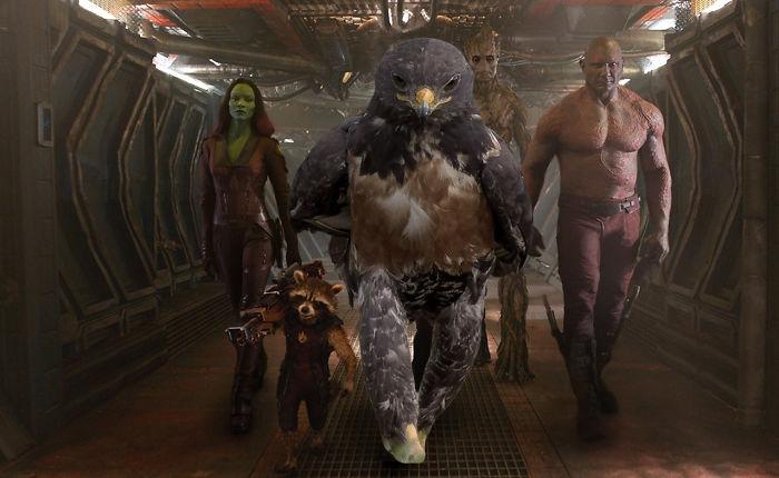 AD-Funny-Hawk-Photoshop-Battle-37