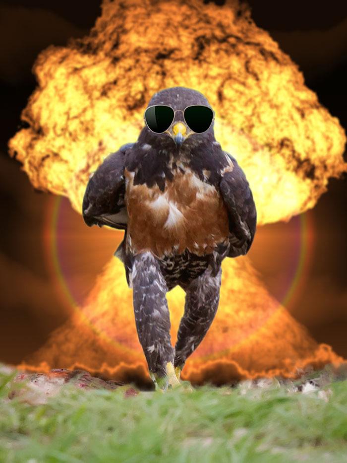 AD-Funny-Hawk-Photoshop-Battle-38