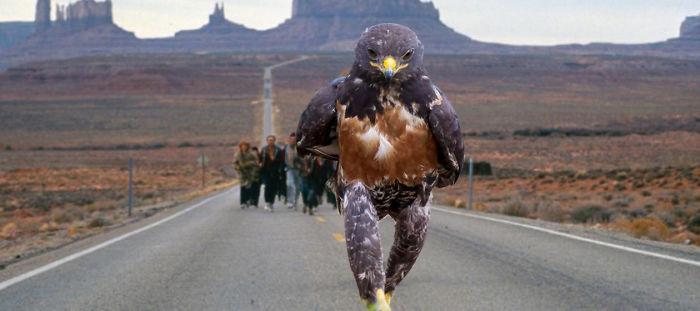 AD-Funny-Hawk-Photoshop-Battle-41