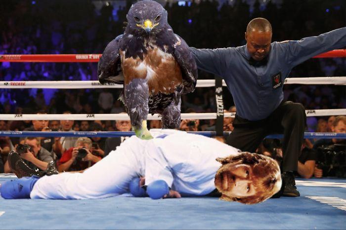 AD-Funny-Hawk-Photoshop-Battle-46
