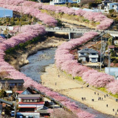 Cherry Blossoms Have Just Bloomed In This Japanese Town, And The Photos Are Magical