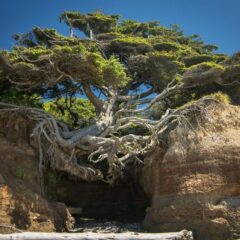 50+ Badass Trees That Refuse To Die No Matter What