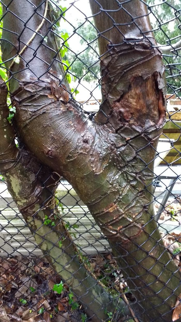 50 Badass Trees That Refuse To Die No Matter What