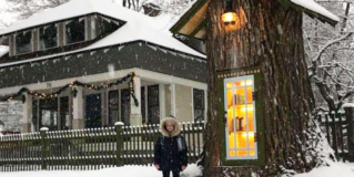 Woman Turned 110-Year-Old Dead Tree Into A Magical Free Little Library For The Neighborhood