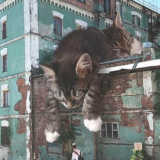 Artist Creates Images That Show How Earth Would Look If Cats Were A Lot Bigger (30 Pics)